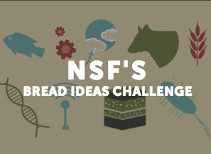 NSF's BREAD Ideas Challenge